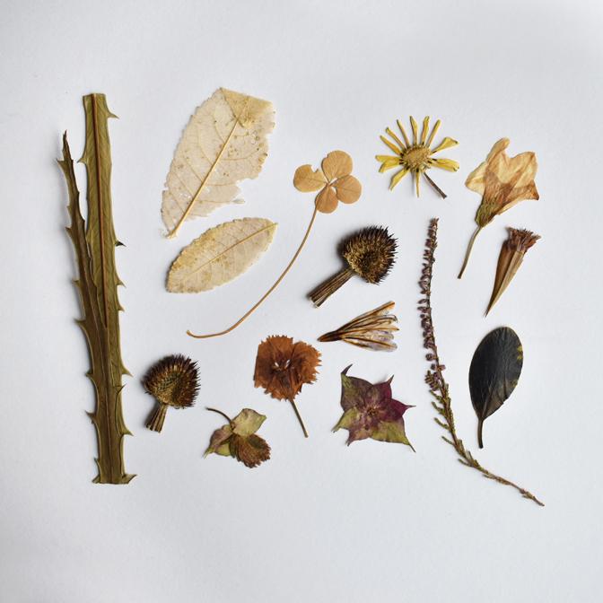 wild things New Zealand - studio katipeifer