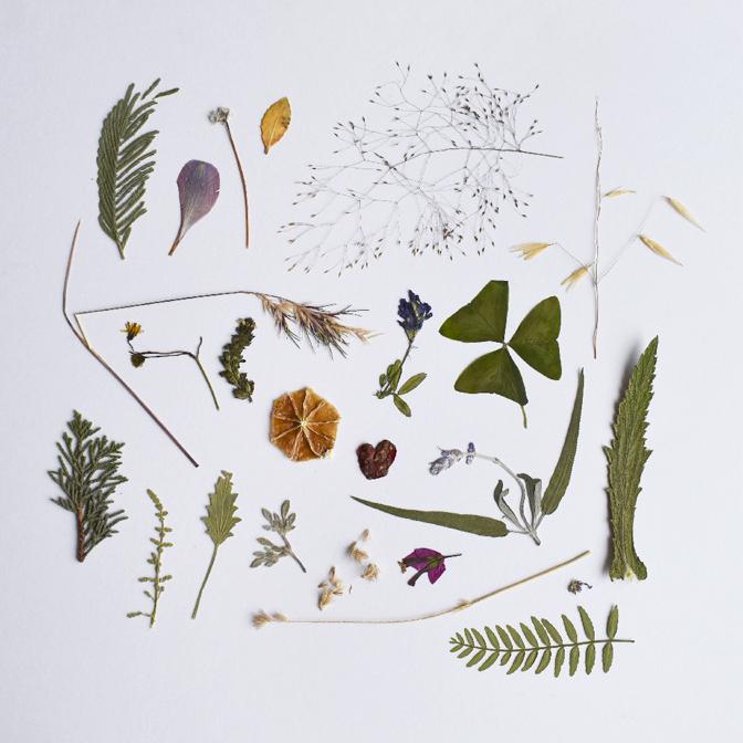 wild things Chile - studio katipeifer