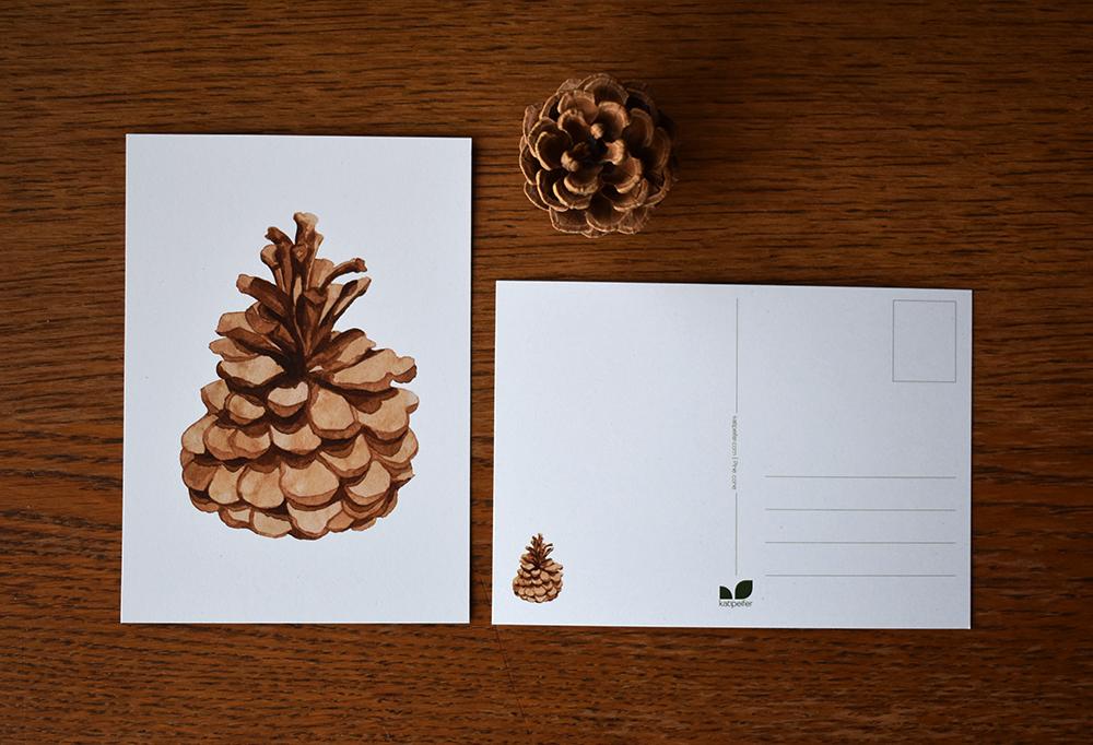 Pine cone 03 - studio katipeifer
