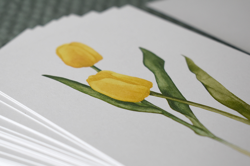 Tulips 07 - studio katipeifer
