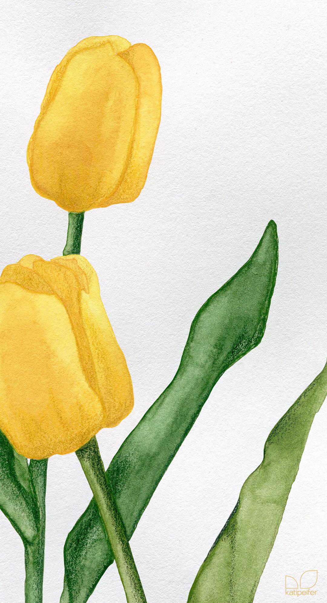 tulips & snowdrops 03 - studio katipeifer